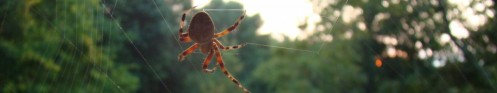 cropped-autumn-spider2.jpg