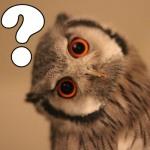 owl-question