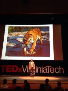 tedx tiger and me